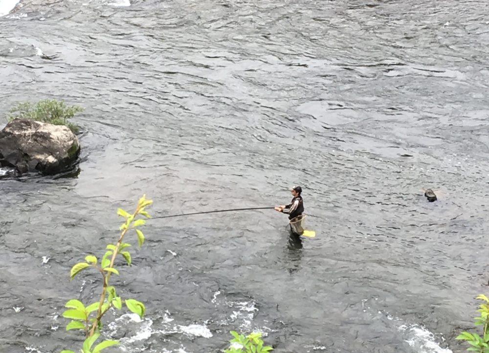 四万十川の鮎の友釣り
