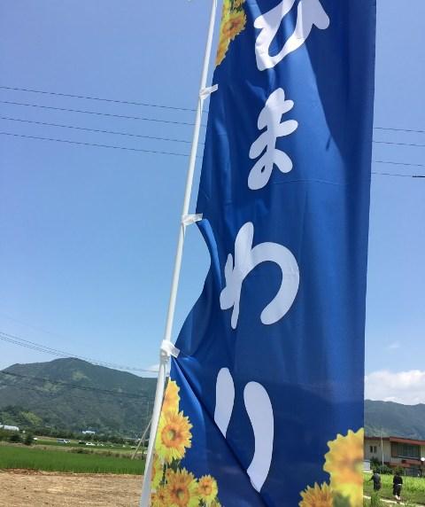 ひまわり畑目印の旗