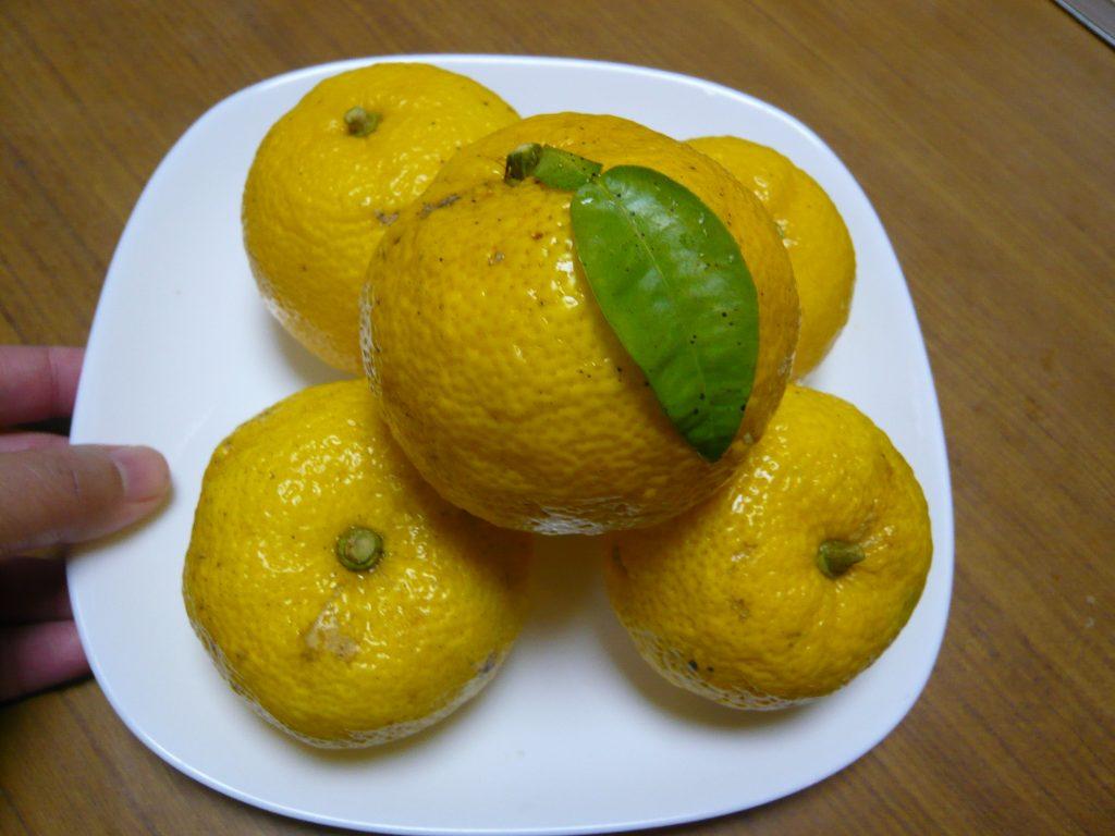 お皿にのせた柚子