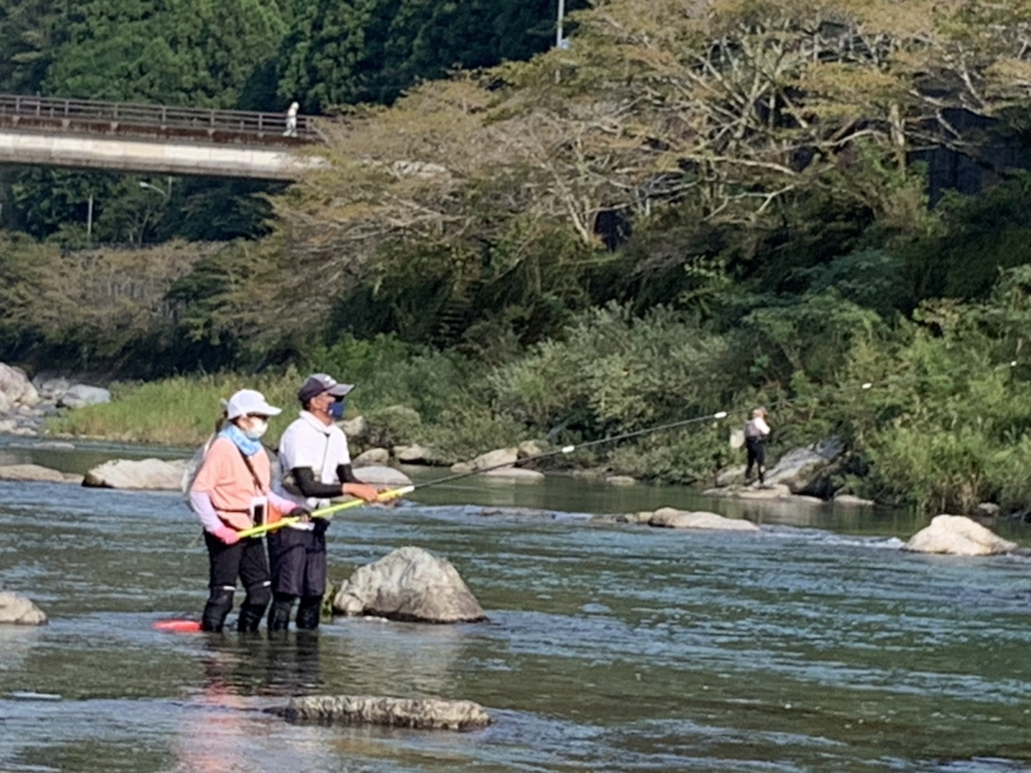 仁淀川・鮎の友釣り体験